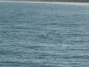 Anyone can see that is a dolphin!
