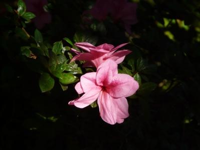 A pretty flower.