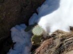Even the cactus is in the d*** snow. Are you seeing the theme here?