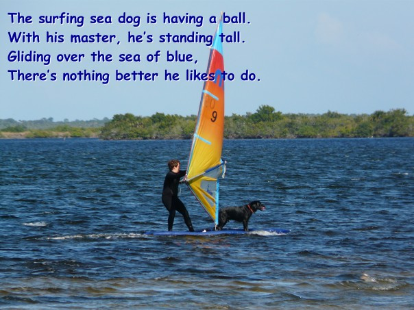 Surfing Dog at Merritt Island