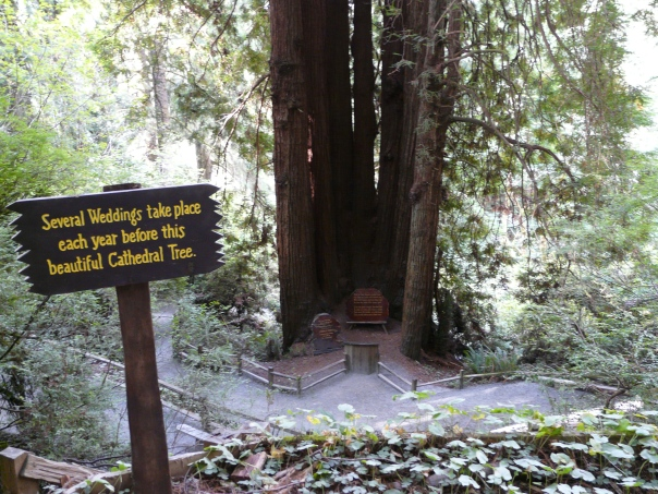 Cathedral Tree, Trees of Mystery, Northern California