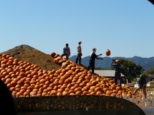 Building the pumpkin pyramid
