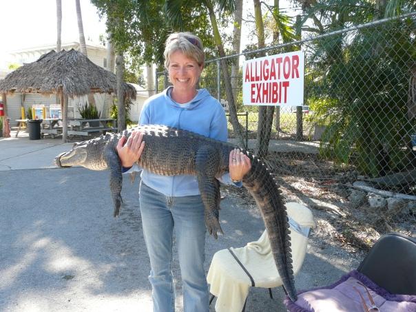 Alligator Exhibit, South Florida