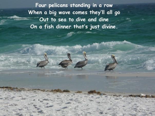 Pelicans, Destin FL