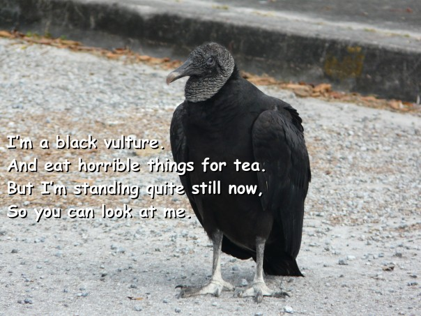 black vulture poem