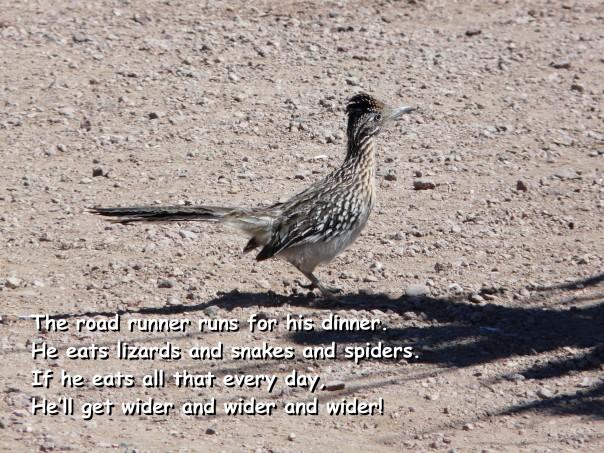 Road runner and poem, Tucson AZ