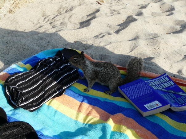 ground squirrel, San Clemente CA
