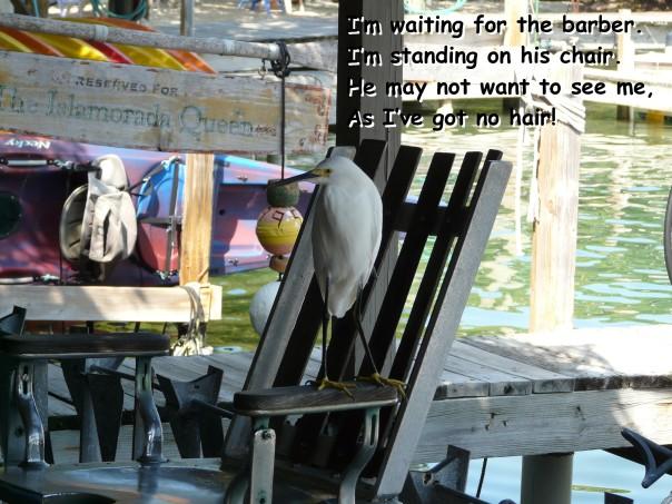 Egret, Florida Keys