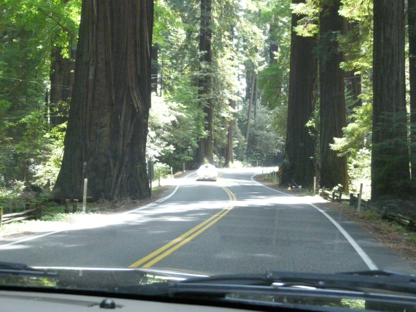 Who planted these big trees right next to the road?