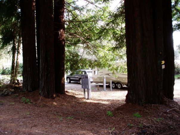 Giant redwoods, Crescent City campground