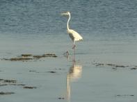 Egret Long Key Florida