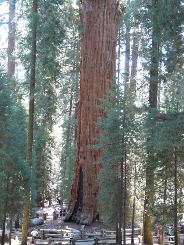sequoia 110