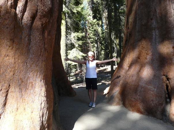 Giant sequoias, Sequoia National Park