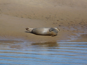 Seal, Wells-next-the-Sea, Norfolk