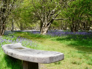 Bluebells, Captain's Wood, Suffolk UK