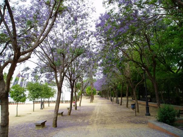 Seville, La Noria